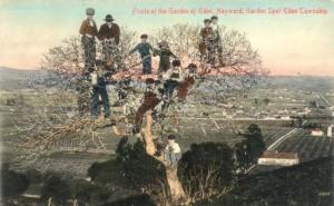 Hayward Garden Spot, Eden Township, Hayward, California, mailed 1911