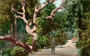 A wooded Pathway, Piedmont Park, Oakland, California, mailed 1912