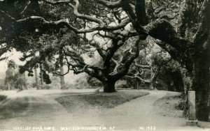 Berkeley Oaks, U. of C., Berkeley, California