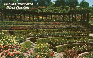 Municiapl Rose Gardens, near 1200 block Euclid Ave., Berkeley, California