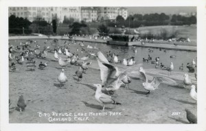 Bird Refuge, Lake Merritt Park, Oakland, California