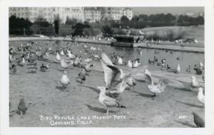 Bird Refuge, Lake Merritt Park, Oakland, California