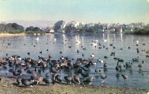 Bird Sanctuary, Lake Merritt, Oakland, Calif.