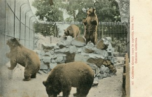 California Grizzly bears in captiviy, Idora Park, Oakland, California