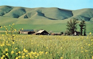 Early Spring in Livermore Valley, California (photo by David Profffitt), mailed 1974