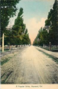 A Popular Drive, Hayward, Cal., mailed 1909