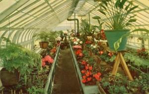 International_Kitchen_interior_Niles_Fremont_California_greenhouse_Plants_for_sale