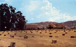 Mendenhall Ranch, Old Barns near the corner of Murietta and Olivina, Livermore, California
