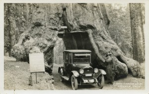 Maxwell Coupe going through the Wawona Drive-Through Tree in Yosemite in 1919,