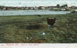 Scene on Lake Merritt, Oakland, Cal.