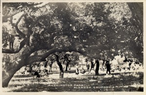 Old Oak Trees, Washington Park, Alameda, California