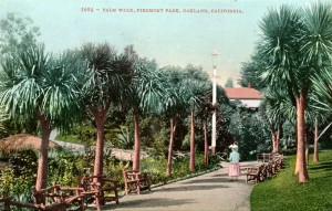Palm Walk, Piedmont Park, Oakland, California, mailed 1911