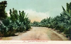 Palm Drive, Piedmont Park, Cal.