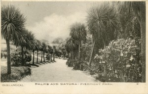 Palms and Datura, Piedmont Park, Oakland, CAL.