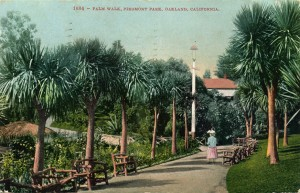 Palm Walk, Piedmont Park, mailed 1911
