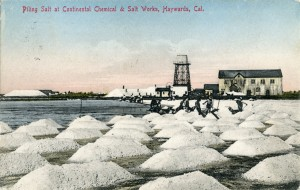 Piling Salt at Continental Chemical and Salt Works, Haywards, Cal., mailed 1909
