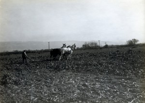 Plowing Sugar Beets, Hayward, California