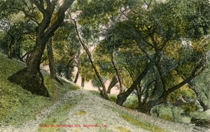 Scene at Strobridge Hill, Haywards, California, mailed 1914