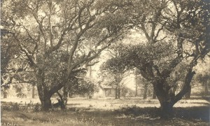Small Houses among Oak Trees, Alameda, California