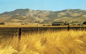 Summertime in Livermore Valley, California (photo by David Profffitt), mailed 1974