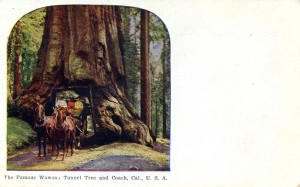 The Famous Wawona Tunnel Tree and Coach, California