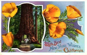 Wawona, With Best New Year Wishes, from California